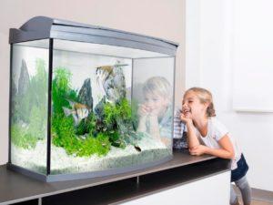 Какой аквариум лучше и как выбрать аквариум