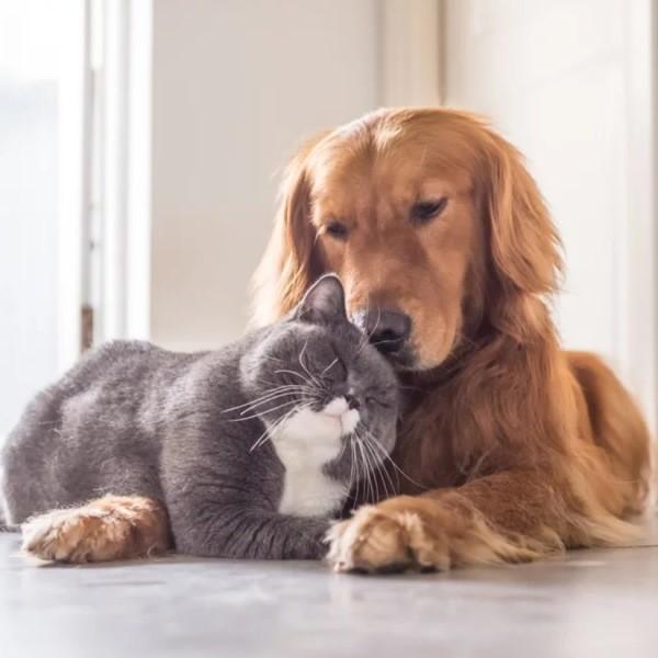 Особенности совместного проживания собаки и кошки