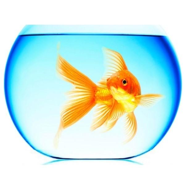 Топ 5: самые популярные аквариумные рыбки