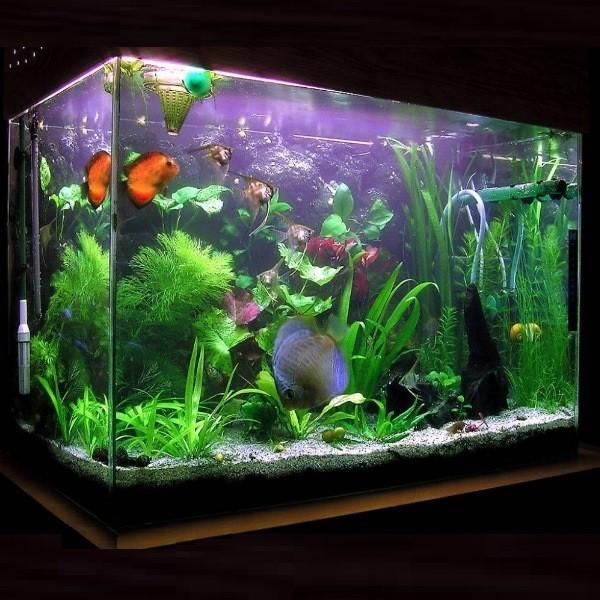 Размер и объем аквариума