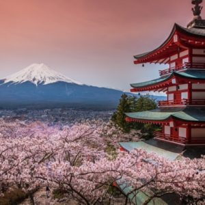 Сакура или декоративная вишня - настоящий орнамент