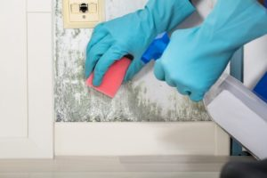 6 советов как бороться с плесенью в доме