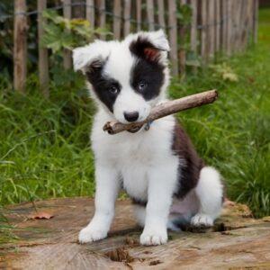 Когда нужно делать прививки щенкам