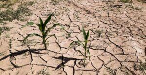Как экономно бороться с засухой в саду и на огороде