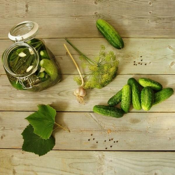 Рецепты соления огурцов несколькими способами