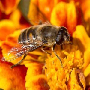 Укусы насекомых: первая помощь народными средствами