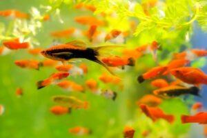 Аквариумные рыбки: виды, подходящие для начинающих