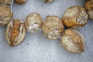Неизвестные, но съедобные орехи