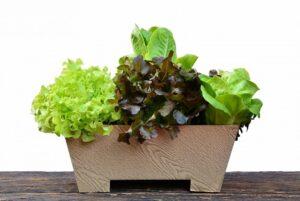 Что можно сажать осенью в саду - список огородных растений
