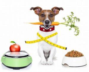 Выбор корма для собак