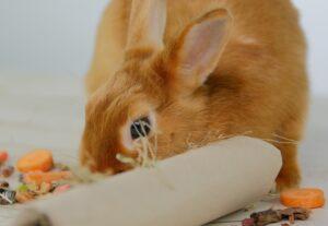 Как кормить и развлекать декоративного кролика одновременно