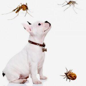 Как защитить собаку от насекомых