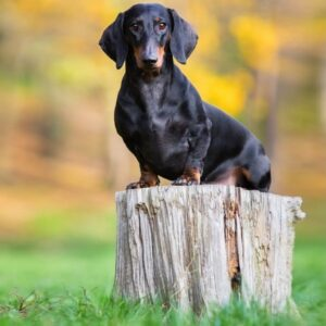 Пищевая аллергия у собак - симптомы и лечение