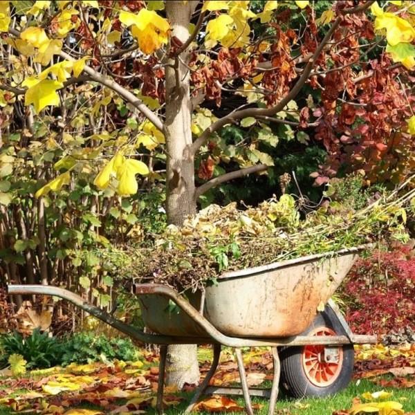 Подготовка сада к зиме: какие работы выполнить