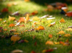 Уход за газоном осенью, что нужно сделать
