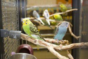 Уход за попугаями - как ухаживать и содержать