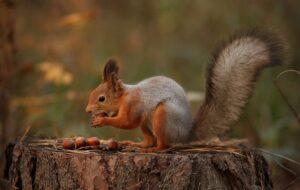 Выращивание фундука: болезни и вредители