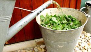Бесплатные органические удобрения из растений 2