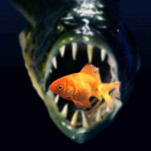 Хищные рыбки для аквариума, которых можно держать дома