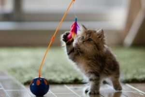 Как связать шарик для кошки