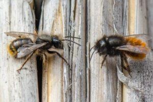 Разведение пчел в городе