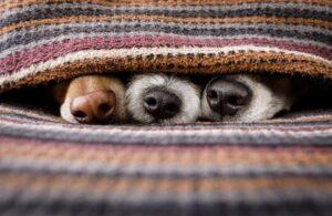 Собачий грипп: как распознать болезнь и лечить ее