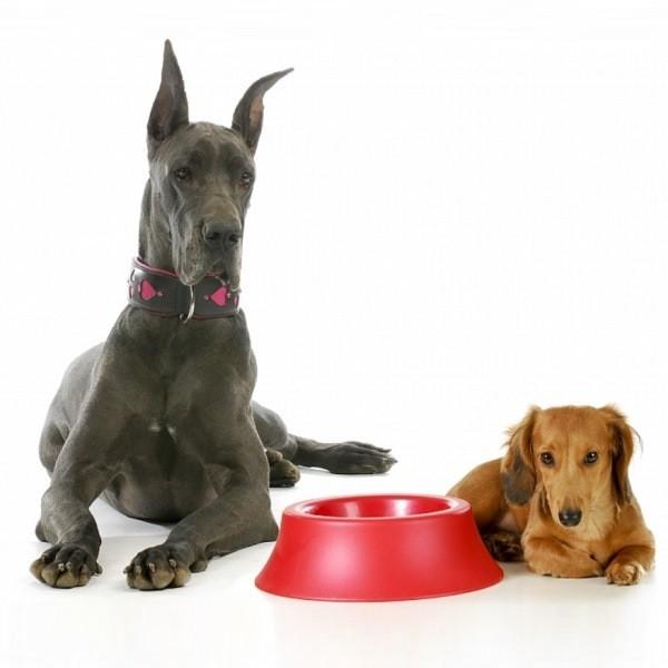 Выбираем правильный корм для собак и щенков