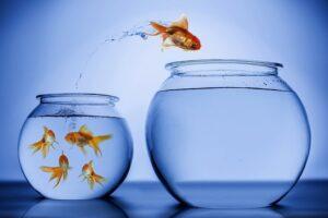 Философия Кайдзен - 5 японских принципов успеха