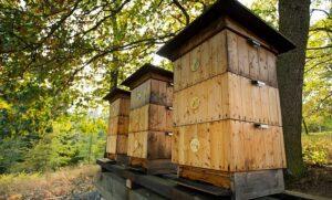 Как разводить пчел и с чего начать