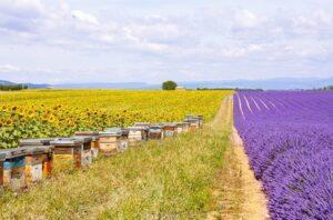Приобретение пчелиной семьи