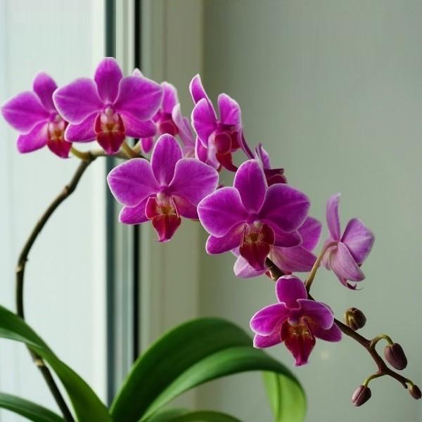 Как ухаживать за орхидеями и травами в саду