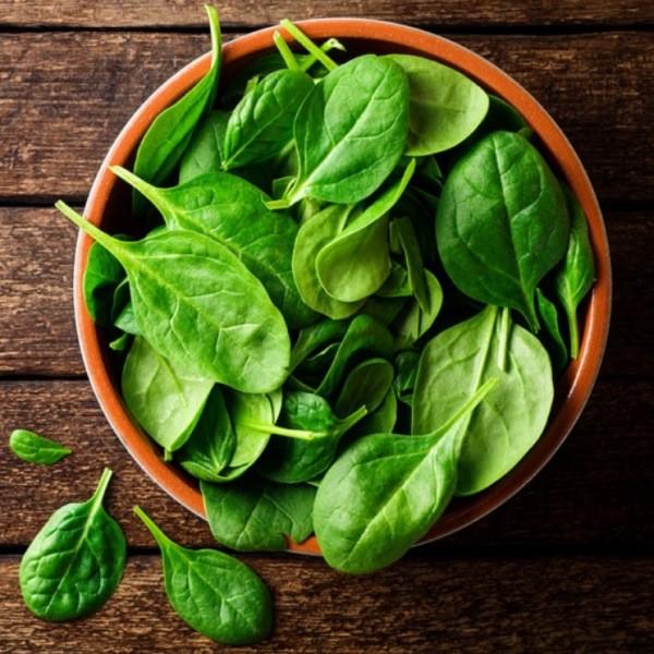 Полезная зелень - выращивание шпината