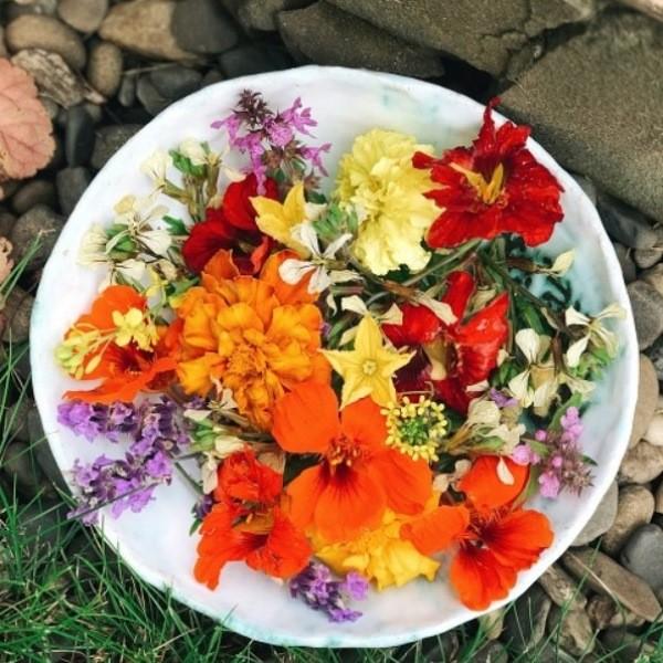Съедобные цветы и как их использовать