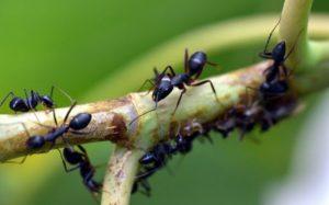 Борьба с молью и муравьями