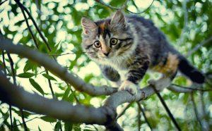 Как делать красивые фотографии домашних животных