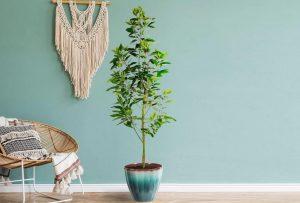 выращивание авокадо