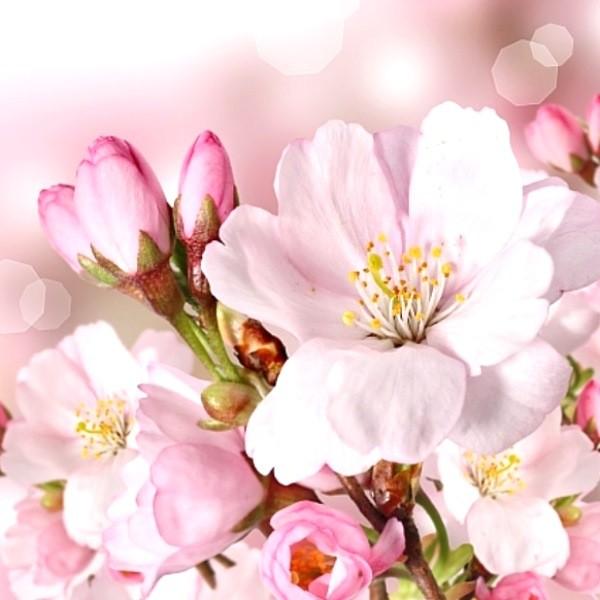 Кустарники с розовыми цветами - украшение любого сада