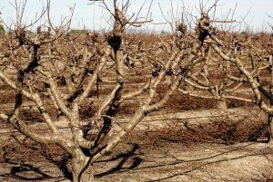 Осенняя обрезка плодовых деревьев - как обрезать правильно