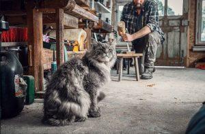 Корм для взрослых собак и кошек