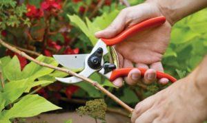 Самые нужные садовые инструменты для дачи