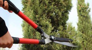 Тщательно выбирайте садовые ножницы