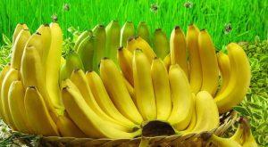 Вырастить комнатный банан в горшке очень просто