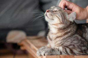 Не гладьте кошек по животу