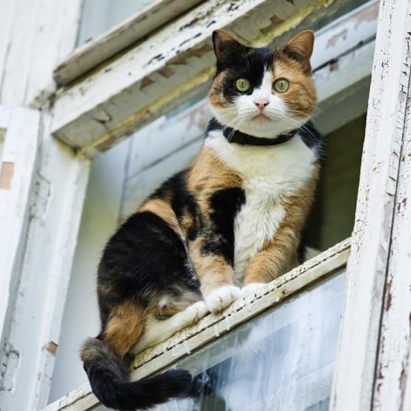 Что нельзя делать с кошкой – 7 полезных советов