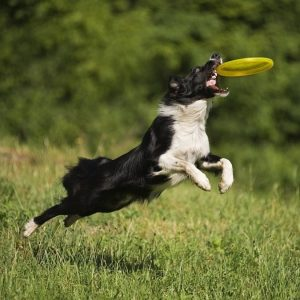Игры и развлечения для собак