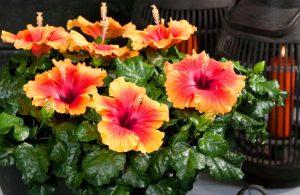 Красивые и большие цветы