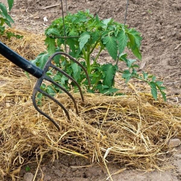 Мульчирование почвы - лучшие материалы для мульчи