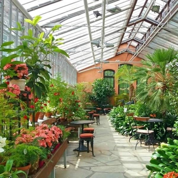 Организация зимнего сада - виды и планировка