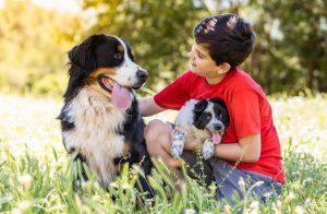 Самые идеальные породы собак для семьи Бернский зенненхунд