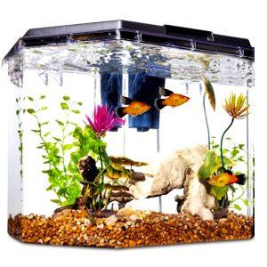 Самые распространенные болезни аквариумных рыбок, их лечение и профилактика
